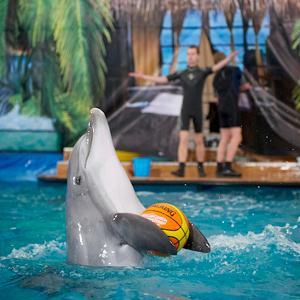 Дельфинарии, океанариумы Белых Столбов