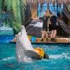 Дельфинарии, океанариумы в Белых Столбах