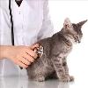 Ветеринарные клиники в Белых Столбах